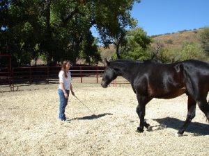 Exploring Boundaries With Horses