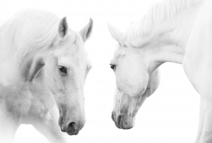 Learn how to create transformational experiences with Horses