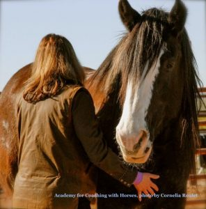 Equine Facilitated Learning Programs Colorado