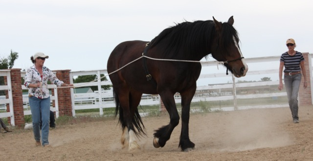 Horsemanship for Equine Facilitated Learning