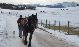 Equine Assisted Learning Colorado
