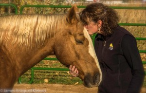The Emergence of Horse as Guide, Mentor and Spiritual Teacher