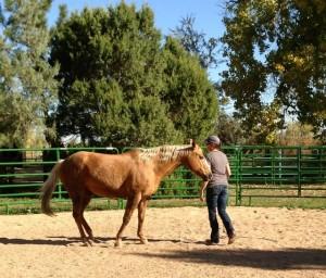 Horse Coaching programs in Colorado