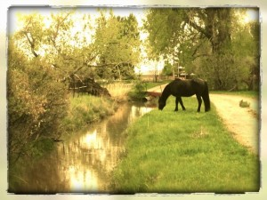 Cantering into the Sweet Nectar of Life