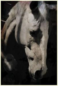 Diva, Palomino mare, Coaching with Horses
