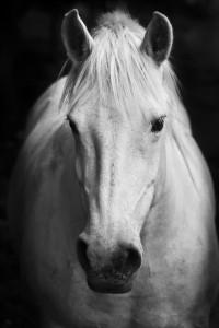 White Horse Wisdom - Kathy Pike