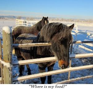 Kathy Pike horse programs in Colorado