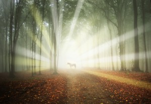 Chakras and Spirituality Academy for Coaching with horses