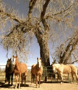 Horse as Healer
