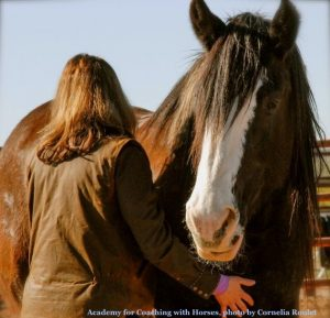 Academy for Coaching with Horses Arizona Conference