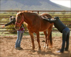 Arizona Horse Retreat with Kathy Pike