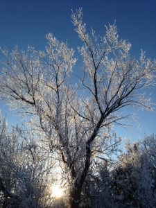 Tree in the Frost at Equine Facilitated Learning program