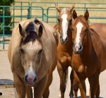 Four Lessons from my Herd