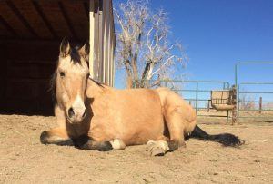 Transitions in the Spring – The Horses are Frisky