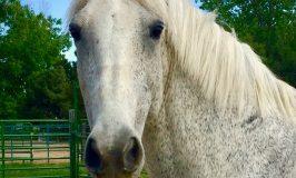 Esperanza Horse Wisdom