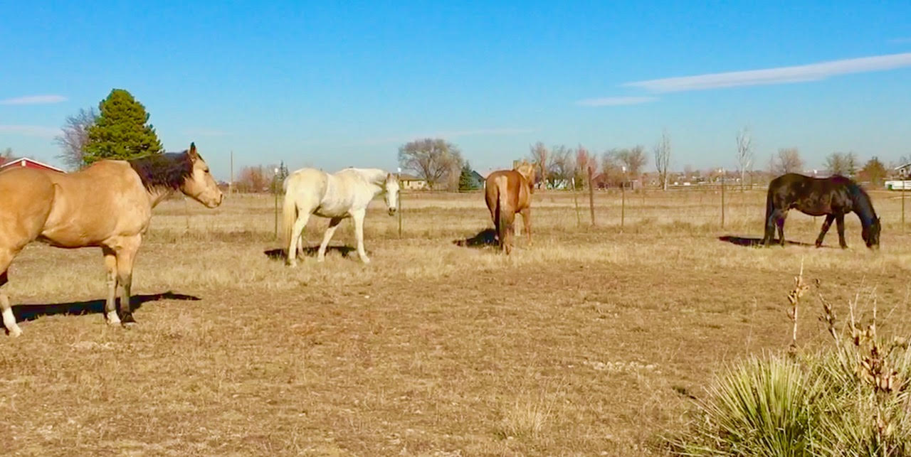 Equine Facilitated Learning Programs