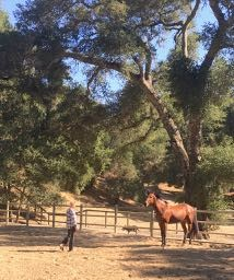 Medicine Horses Moon Dance Ranch