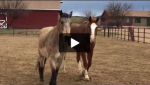 Connection with Horse Creates Movement