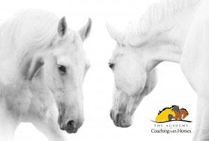 Quantum Horse Evolving Consciousness