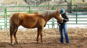EFLC Horse Human Connection
