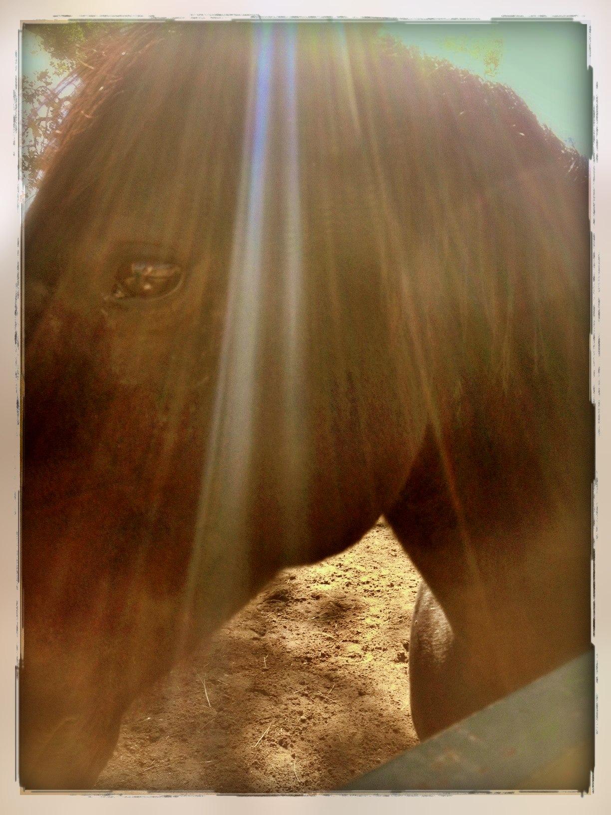 Quantum Horse Kathy Pike