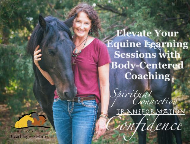 Online Training for Equine Learning