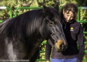 Coaching with Horses online training programs and certification with Kathy Pike