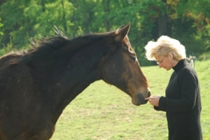 Coaching with Horses Online Training - Transform your relationship with horse and help your clients come into horse time